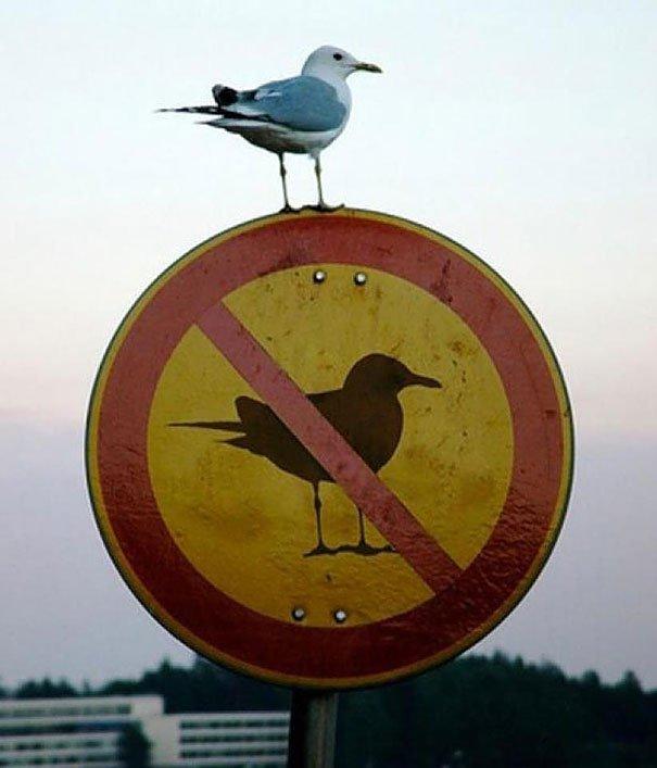 pravila, pravila