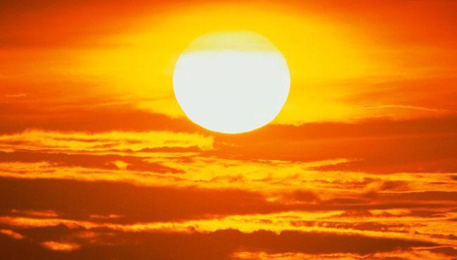 sunce-psovka